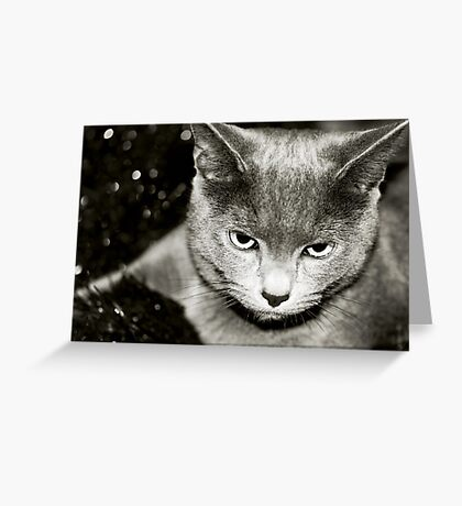 Silver Greeting Card