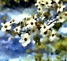 Kirschblüte by Roland Richter