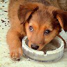 Shy puppy  by Riko2us