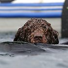 Water Dog by Mark Cooper