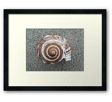Spiral Shell Sacred Geometry Framed Print