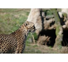 Natural Speed Photographic Print