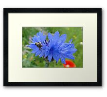 Dining At The Cornflower Table Framed Print
