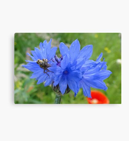 Dining At The Cornflower Table Canvas Print