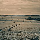 Lincolnshire Wolds by SwampDogPhoto