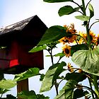 Sunflowers and Birdhouse by Paula Tohline  Calhoun