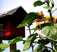 Sunflowers and Birdhouse by Paula Tohline  Calhoun