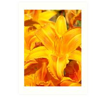 Warmth - Vibrant Yellow Flower Art Print
