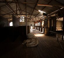 The Shearing Shed by Elizabeth Tunstall