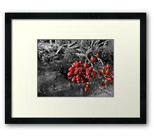 The forbidden fruit Framed Print
