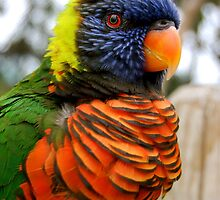 Parrot by lisa roberts