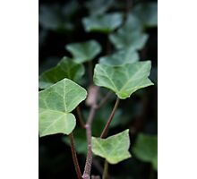 Trailing Leaves Photographic Print