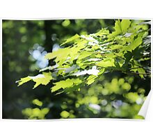Bokeh Leaves Poster