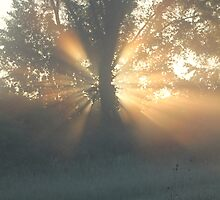 Tree Trunk Halo by LaurieSalzler