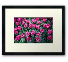 Bright Pink @ Keukenhof Framed Print