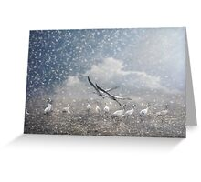The cranes of Fischland Greeting Card