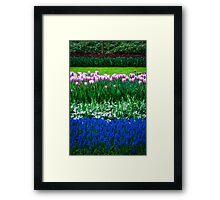Tulip Layers @ Keukenhof Framed Print