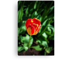 Red & Yellow Tulip @ Keukenhof Canvas Print