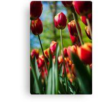 Red / Yellow Tulips @ Keukenhof Canvas Print