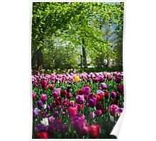 Colours of Keukenhof Poster