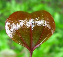 Leaf Heart by FathersWorld
