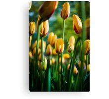 Yellow / Red Tulips @ Keukenhof Canvas Print