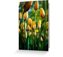 Yellow / Red Tulips @ Keukenhof Greeting Card