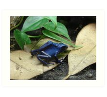 """Blue Dart Frog""  by Carter L. Shepard Art Print"