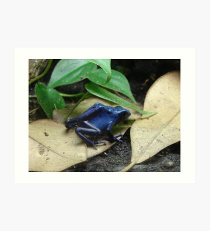 """Blue Dart Frog""  by Carter L. Shepard Art Print"