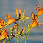 Cottage Lillies by Jeanette Muhr