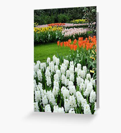 Dreamy White Hyacinths and Orange Tulips - Keukenhof Gardens Greeting Card
