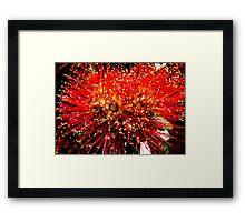 Pohutakawa Flower Framed Print