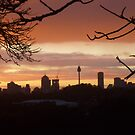 Sydney Cityscape at Sunset by ange2