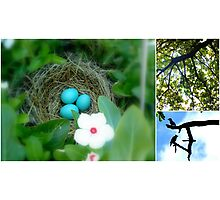 Bird Love Story Photographic Print