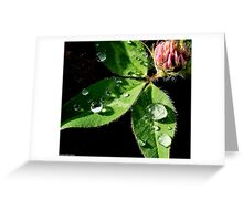 Water drops on leaf Greeting Card