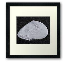 Beach Shell Framed Print