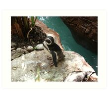 """Black Footed Penguin 1""  by Carter L. Shepard Art Print"