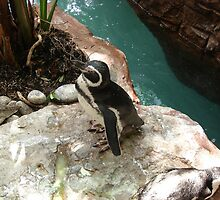"""Black Footed Penguin 1""  by Carter L. Shepard by echoesofheaven"