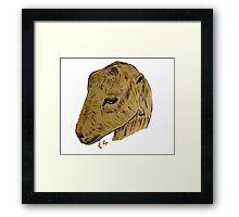 """Lamancha Goat""  by Carter L. Shepard Framed Print"