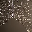 Spiders web by Russell Jenkins