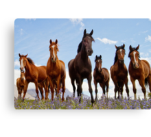 High Country Horses Canvas Print