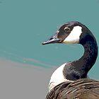 Goose by JudithBillinger