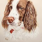 Springer spaniel dog portrait by artbykarie-ann