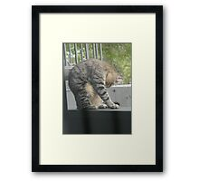 Must Clean Our Fur Framed Print