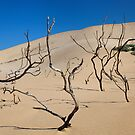 Shifting Dune by Norbert Probst