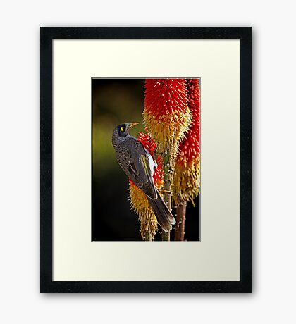 A Taste of Nectar Framed Print