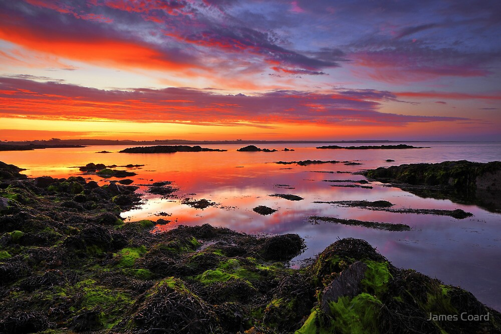 Tide Out by James Coard