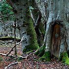 The Door in the Tree No.2 by David Robinson