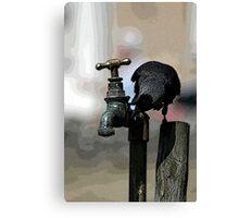 Thirsty Jackdaw Canvas Print