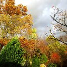 Storm brewing over the backyard...... by Bine